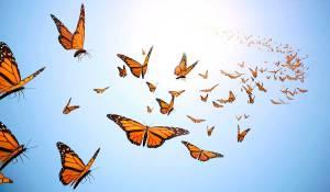 butterflies_1200px